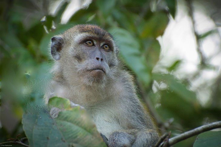 Borneo 9 opt Borneo: A Gorgeous Journey Of Wildlife And Rainforest