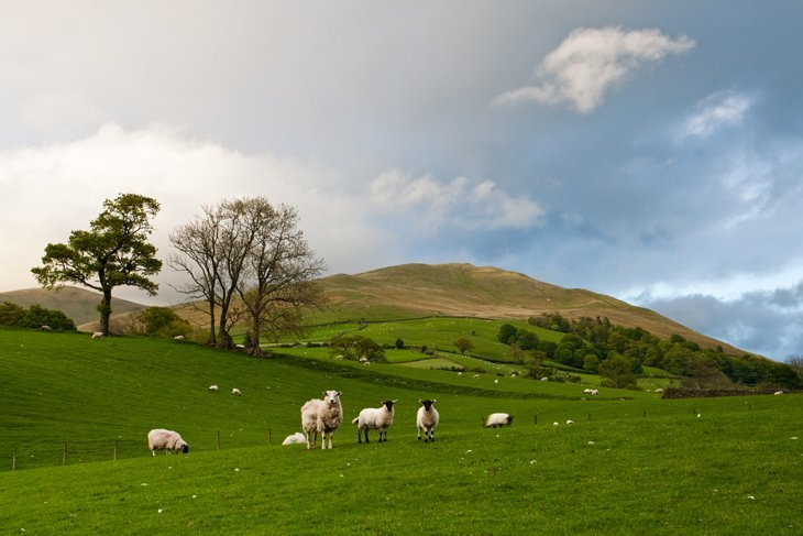 Beautiful Britain – Sheep In The Scenes