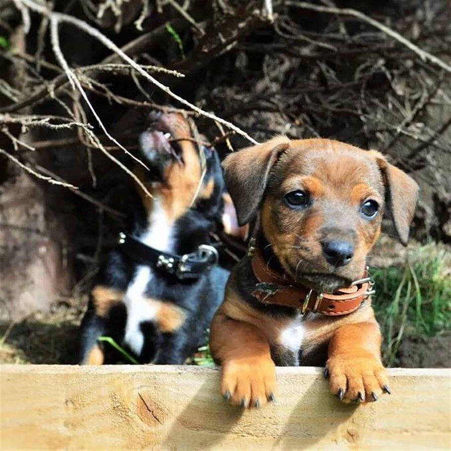 Brothers Smokey and Bandit- animals - Copy