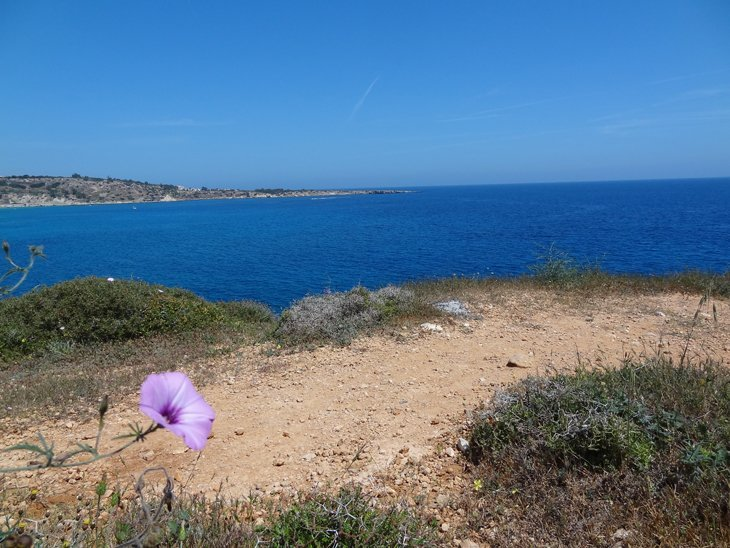 DSC00296 Sapphire Seas of Cyprus – Strolling The Coast of Ayia Napa