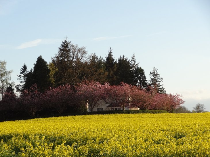 house behind field of yellow