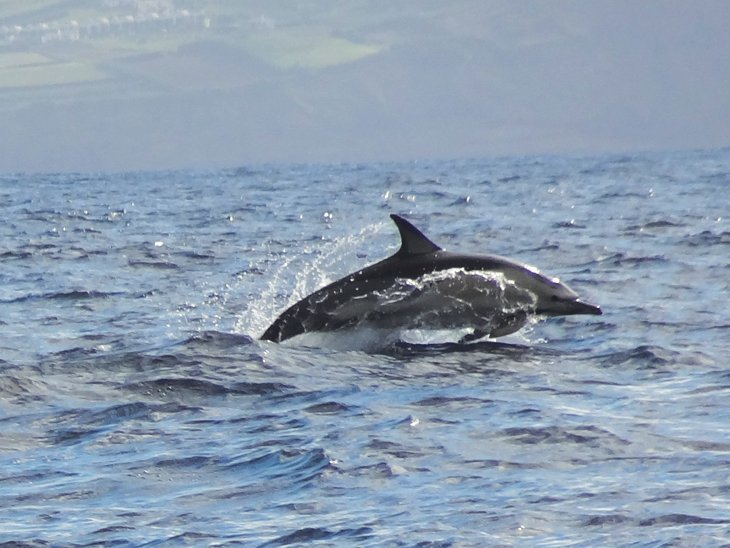DSC014051 The Azores – Dolphins And Whales Galore With No Walls