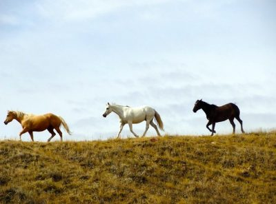 Canada – Riding Away From It All Over The Saskatchewan Prairie
