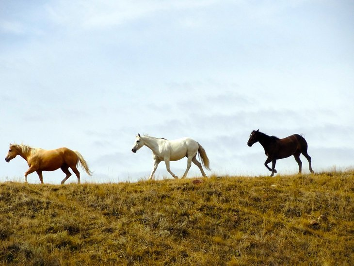 Canada – Riding Away From It All Over The Saskatchewan Prairie 1