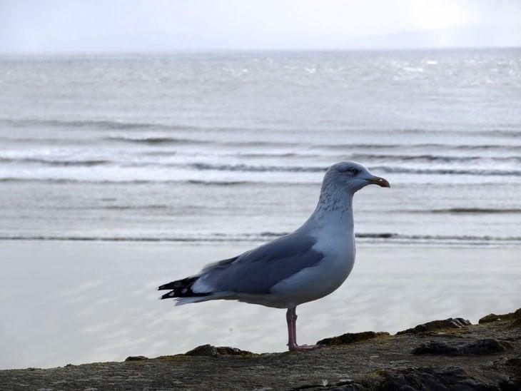 Bridgend: Hiking The Wales Coast Of Sand, Sea And Surf 11