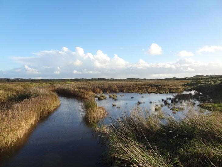 DSC02808 Bridgend: Kenfig Nature Reserve