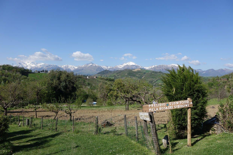 DSC029771 La Conca: Delicious Agriturismo of Le Marche