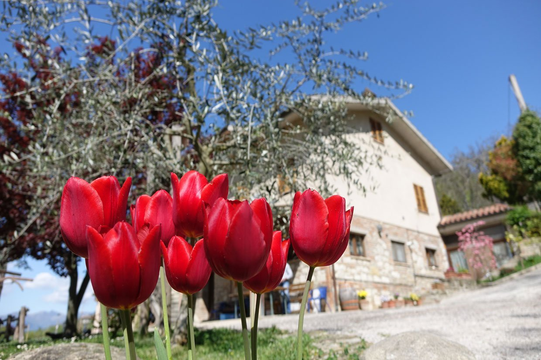 DSC030301 La Conca: Delicious Agriturismo of Le Marche