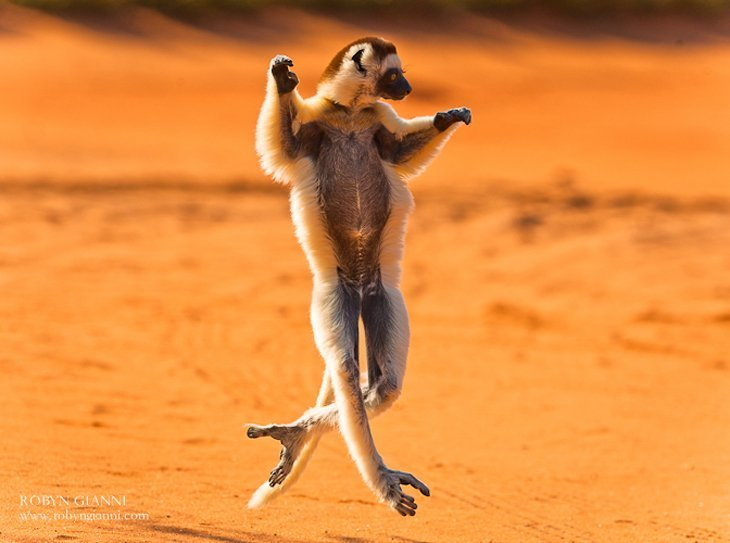 This Is Madagascar!
