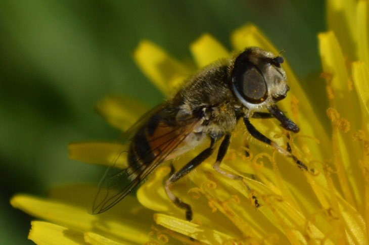 A Busy Day On The Dandelions