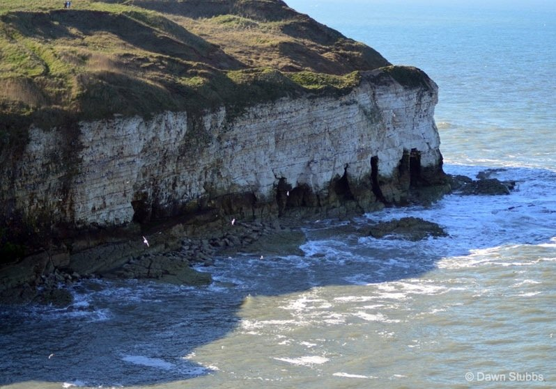 Flamborough Head – Britain's northern chalk sea cliff