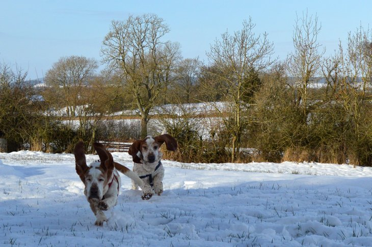 A Fun Winter Day With The Hounds