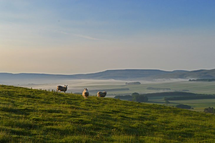 Amongst The Limestone Pavements of Orton and Great Asby Scar