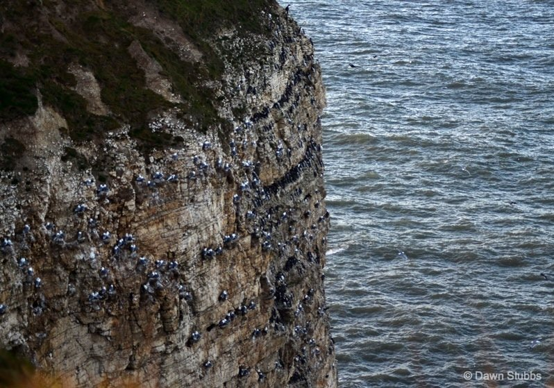 DSC_0417-yorkshire-coast- Flamborough Head – Britain's northern chalk sea cliff