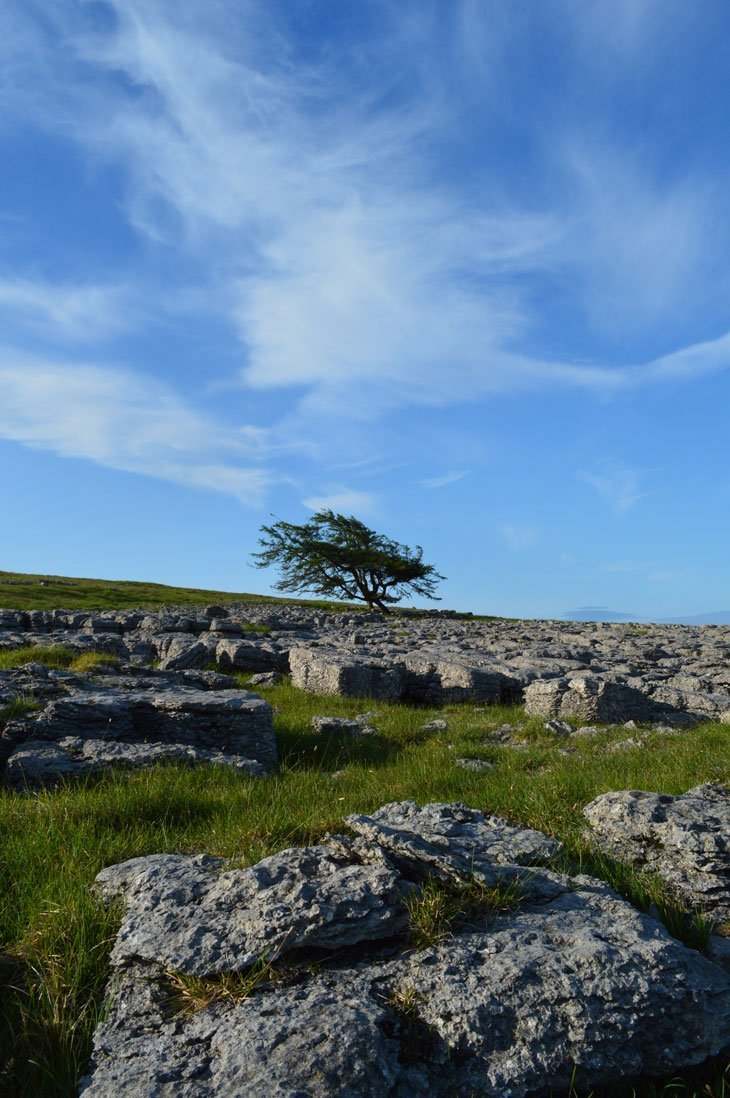 DSC 0444 Amongst The Limestone Pavements of Orton and Great Asby Scar