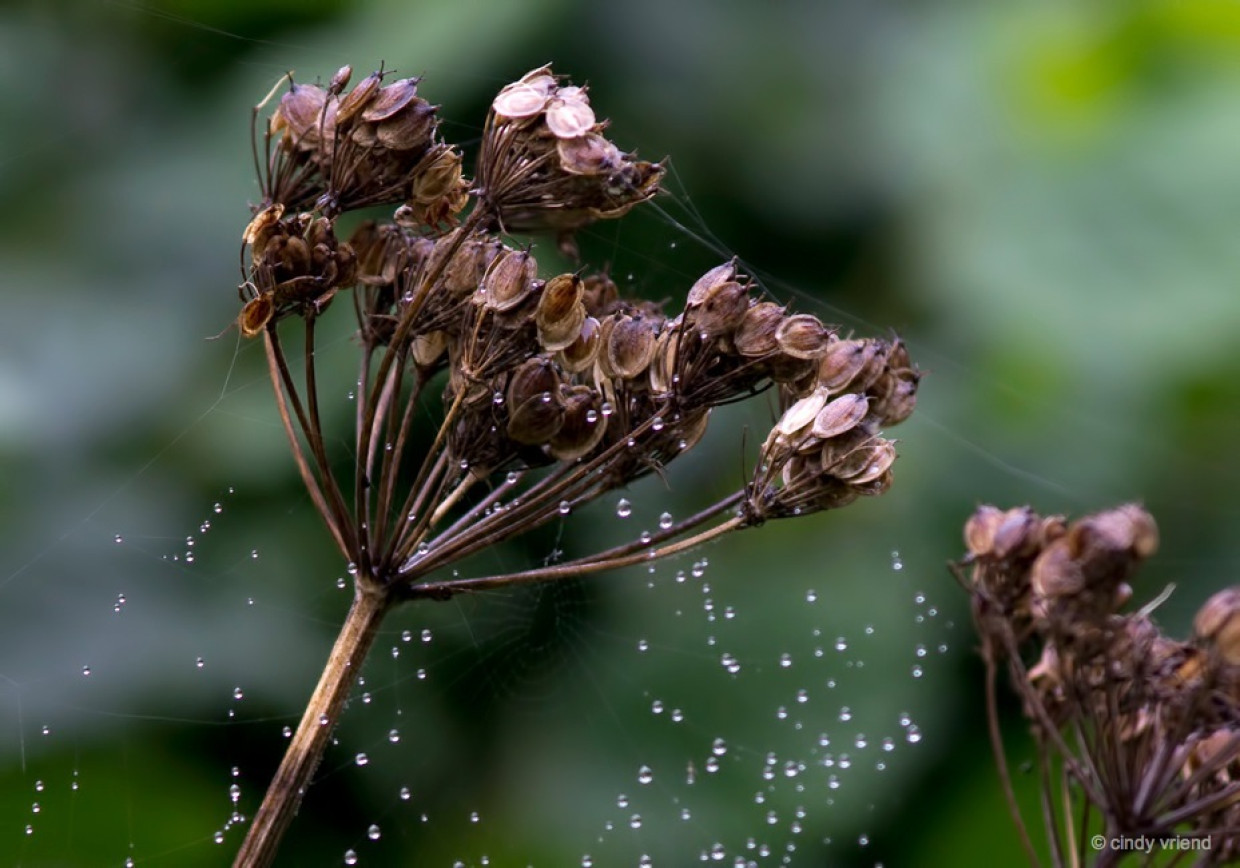 Gently caressed by raindrops