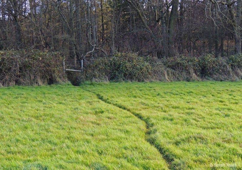 Deer-path-in-grass- deer spotting