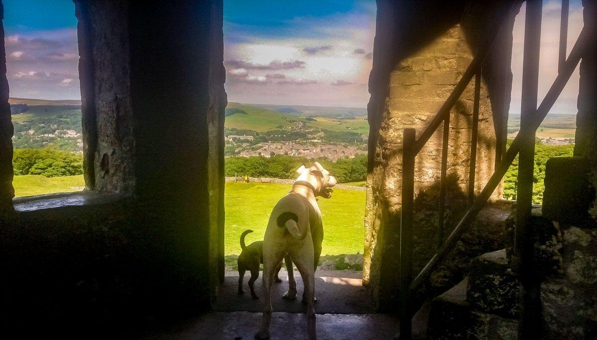 dogs enjoying the views