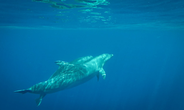 Tenerife – Up Close With Dolphins