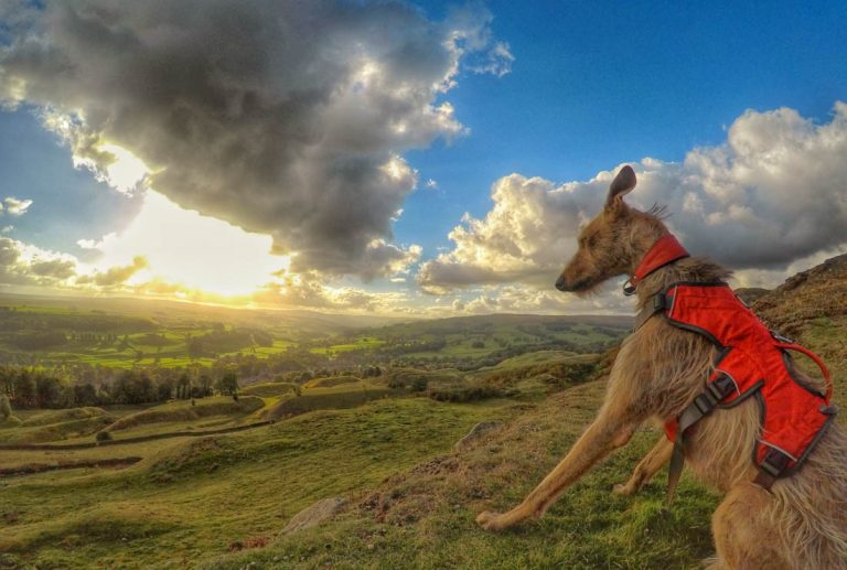 A Walk Above Stanhope in The Durham Dales
