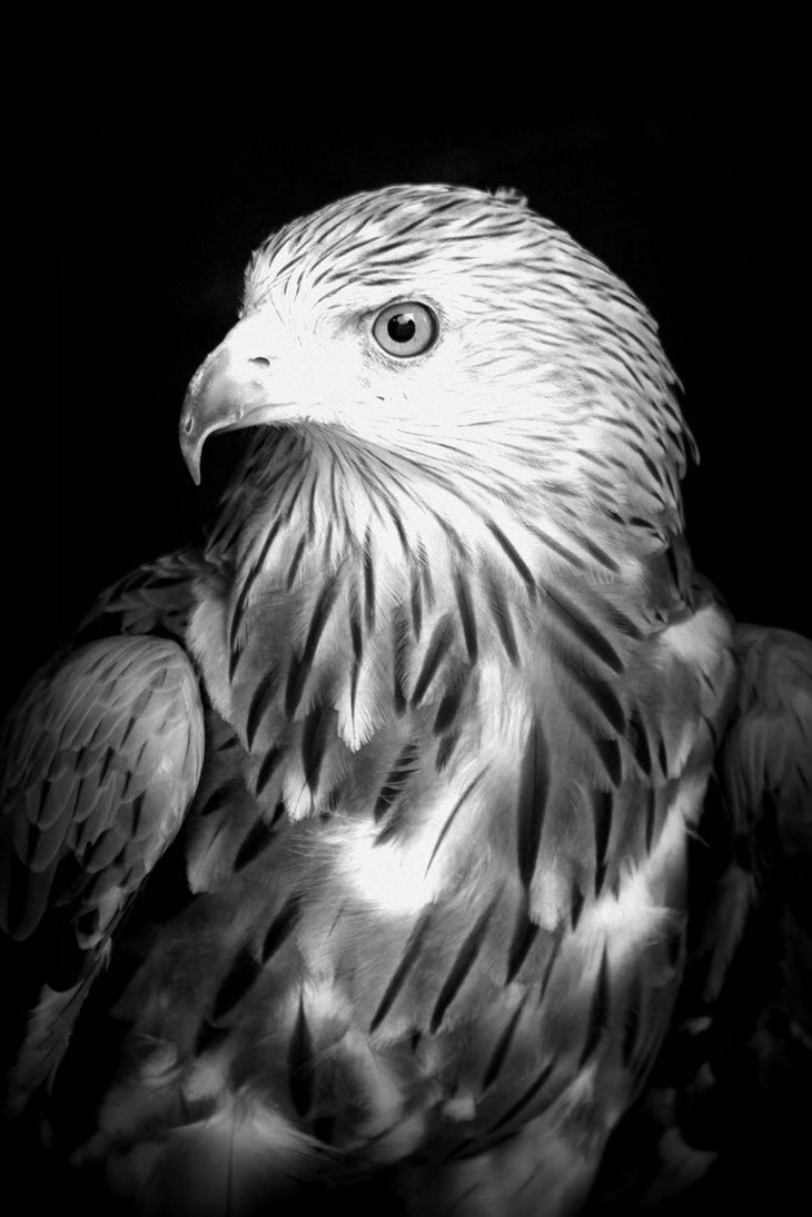 Eagle-1 Live And Love A Passion For Photography