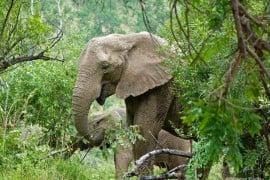 Elephant-with-her-calf-at-Pilanesberg-National-Park-Fav.'s0012- south africa