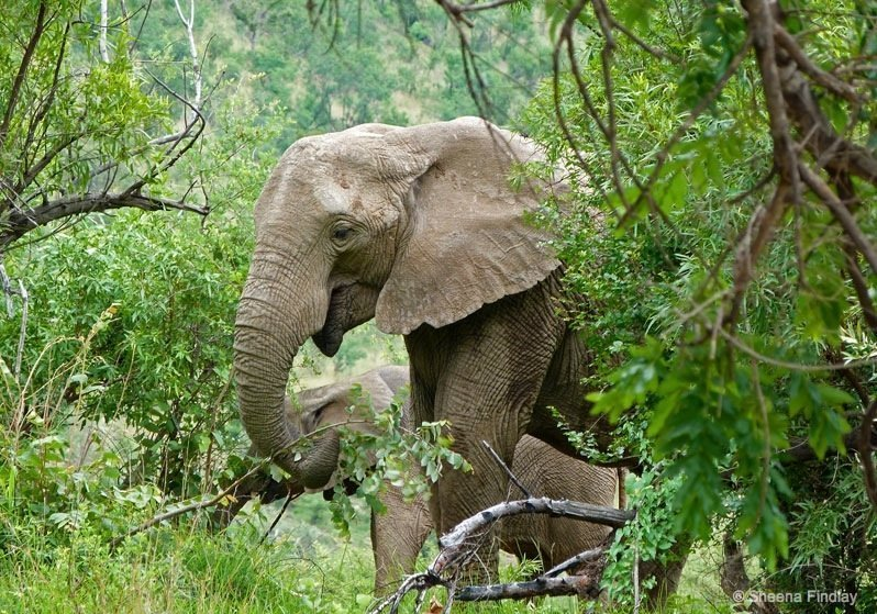 South Africa – Pilanesberg Game Reserve and National Park 1