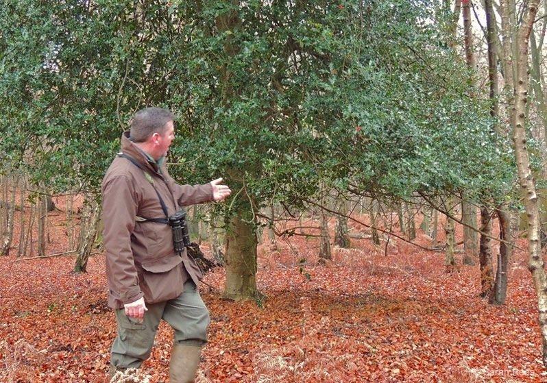 Epping-Forest-Deer-Walk- deer spotting