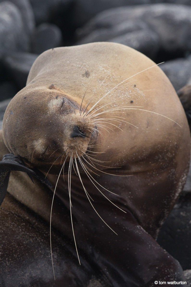 Espanola-1-Ecuador Galapagos, Española – one of the greatest wildlife walks on the planet