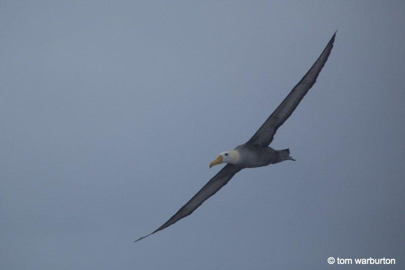 Espanola-11-Ecuador Galapagos, Española – one of the greatest wildlife walks on the planet