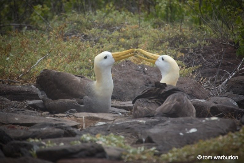 Espanola-12-Ecuador Galapagos, Española – one of the greatest wildlife walks on the planet