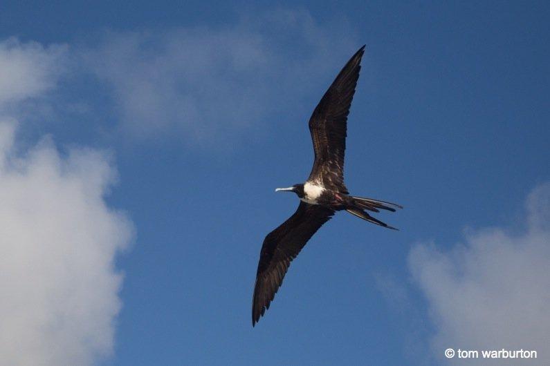 Espanola-14-Ecuador Galapagos, Española – one of the greatest wildlife walks on the planet