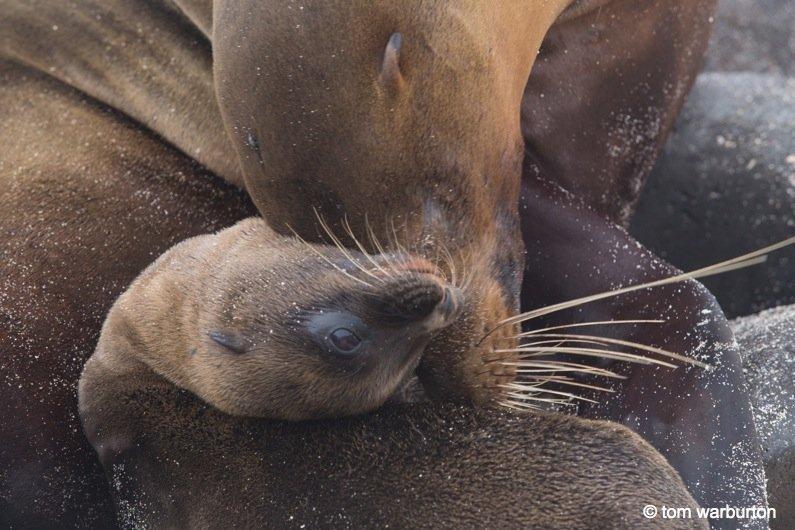 Espanola-2-Ecuador Galapagos, Española – one of the greatest wildlife walks on the planet