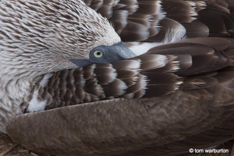 Galapagos, Española – one of the greatest wildlife walks on the planet