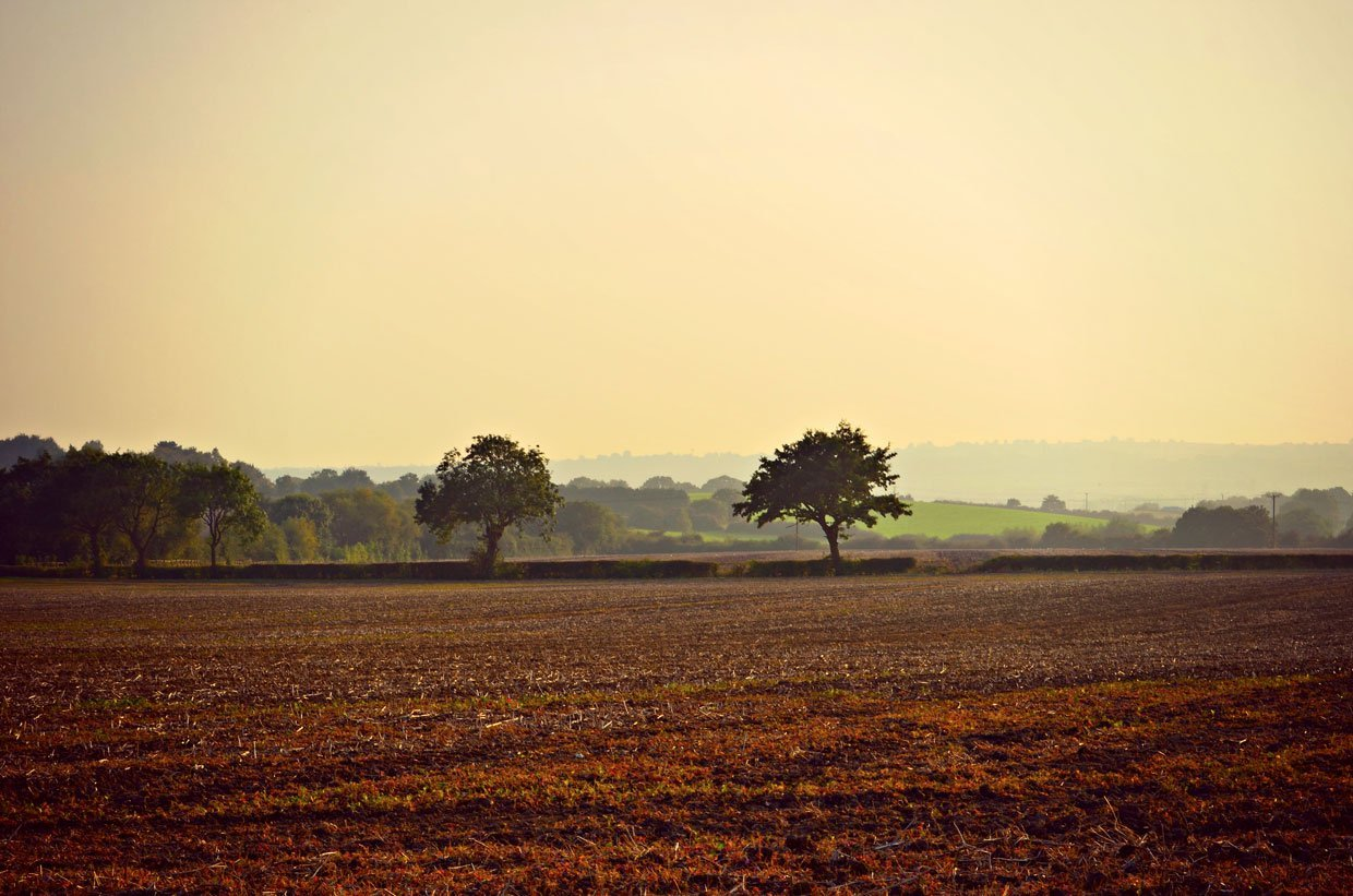 Farmland-around-Strelley-Village