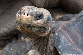 Galapagos-1-18_main- Ecuador