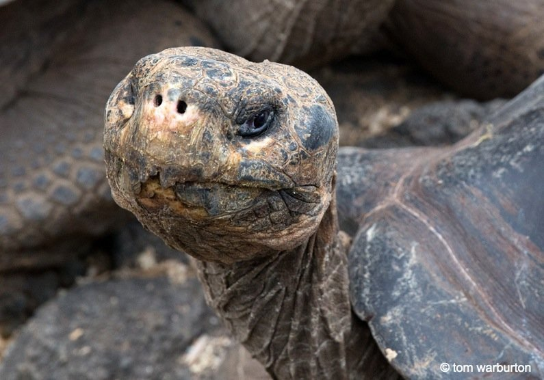 Galapagos, Ecuador – The Enchanted Islands