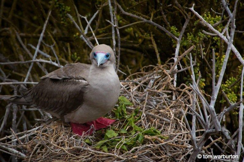 Galapagos, Ecuador – The Enchanted Islands