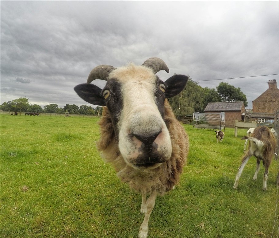 GoPro-Animals-1-travels GoPro Animals on My Travels and Wanders