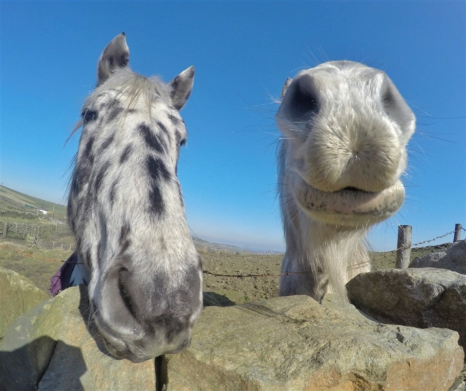 GoPro-Animals-11-travels GoPro Animals on My Travels and Wanders