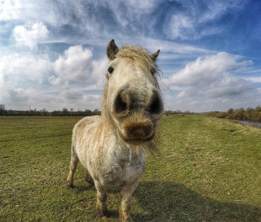 GoPro-Animals-12-travels GoPro Animals on My Travels and Wanders