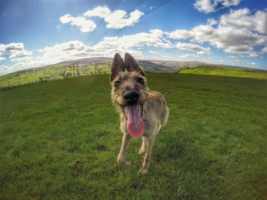 GoPro Animals on My Travels and Wanders