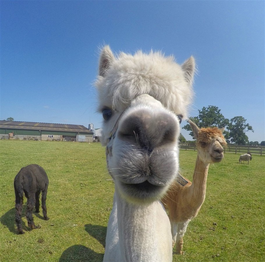 GoPro-Animals-5-travels GoPro Animals on My Travels and Wanders