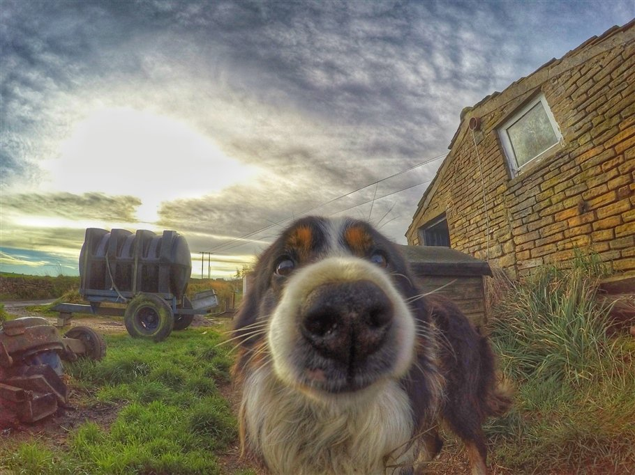 GoPro-Animals-7-travels GoPro Animals on My Travels and Wanders