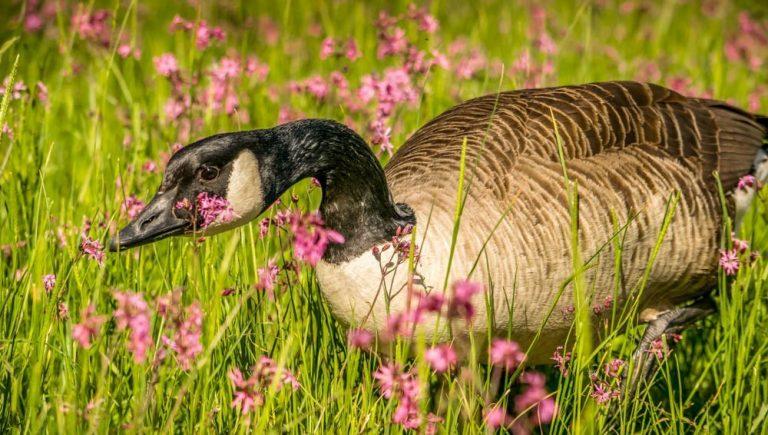Walthamstow Wetlands: Wild London