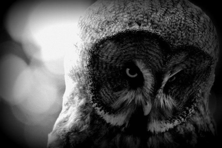Great-Gray-Owl Live And Love A Passion For Photography