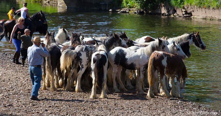 Appleby Horse Fair - Washing Down in the River
