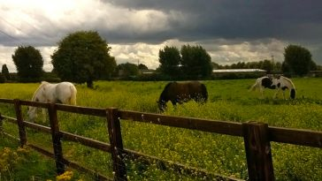Tramp Through Hackney Marshes
