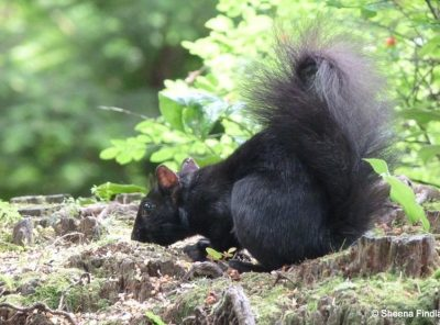 Black Squirrels and Birds of Stanley Park, Vancouver