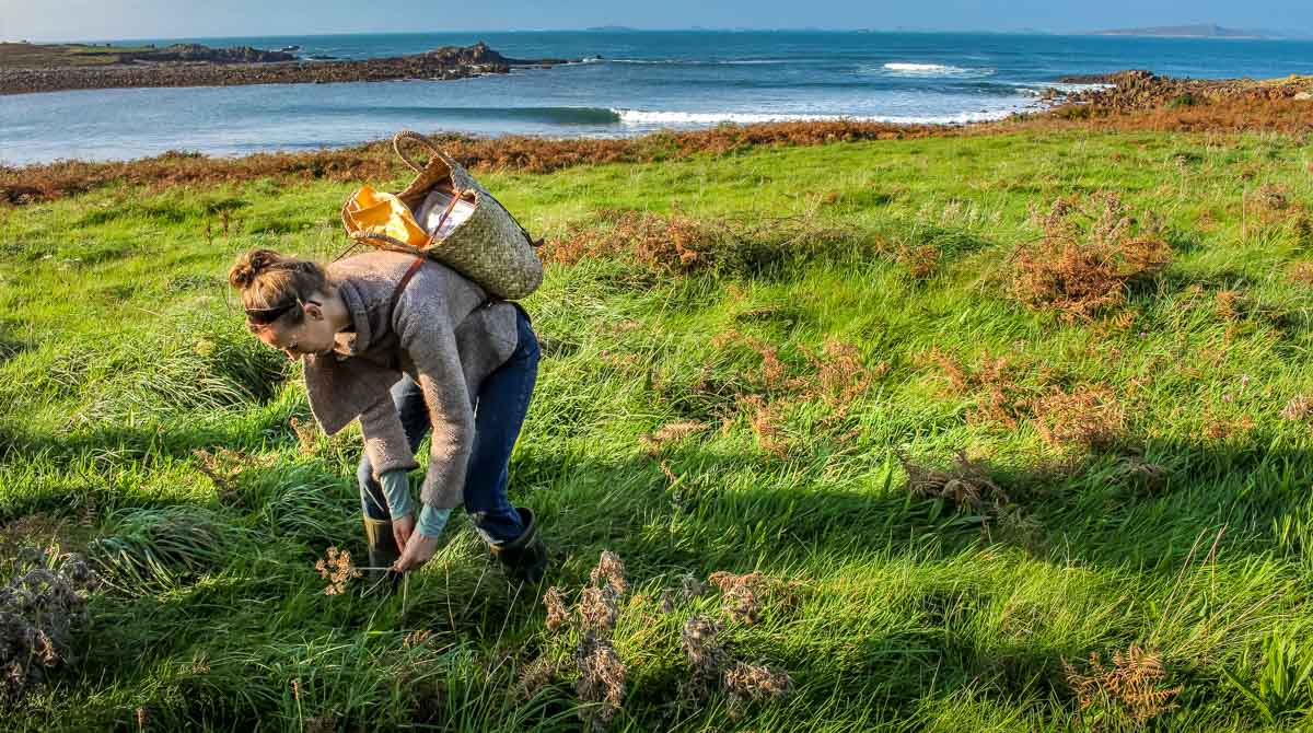 A Wild Food Walk on the Isles of Scilly 1